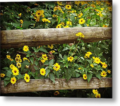 Daisy's Fence Metal Print
