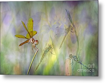 Dance Of The Dragonflies Metal Print