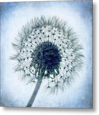 Dandelion In Blue Metal Print by Tamyra Ayles