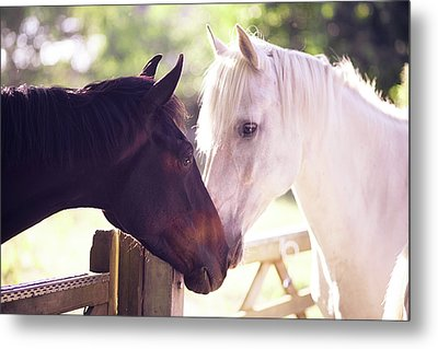 Dark Bay And Gray Horse Sniffing Each Other Metal Print by Sasha Bell
