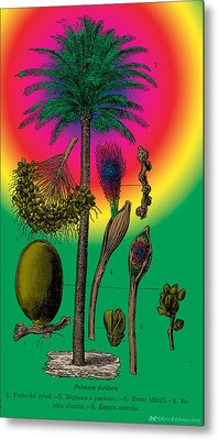 Date Palm Metal Print by Eric Edelman