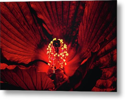 Deep Red Metal Print by Jae Mishra