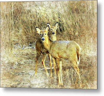 Deer Duo 6 Metal Print