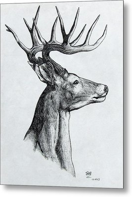 Metal Print featuring the drawing Deer by Michael  TMAD Finney