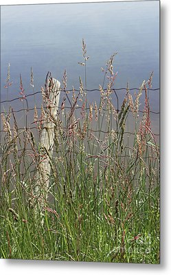 Delicate Grasses Along Fence Metal Print by Barbara McMahon