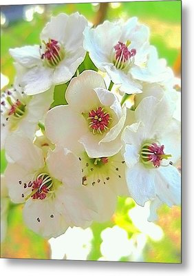 Delicate White Blossoms Metal Print by Beth Akerman