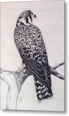 Desert Hawk II Metal Print by Suzette Kallen
