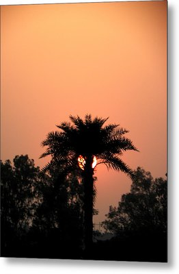 Desert Rose Metal Print by Aim to Aimless