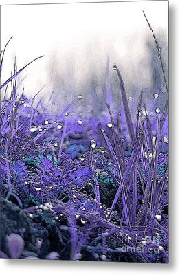 Dew Drops Magic Two Metal Print by Robert Ball