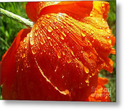 Dew Drops On A Poppy Metal Print
