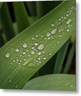Metal Print featuring the photograph Dew Drops On Leaf by Jean Noren