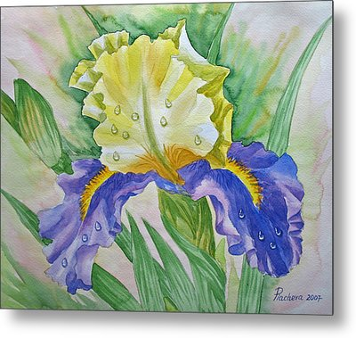 Dew Drops Upon Iris.2007 Metal Print by Natalia Piacheva