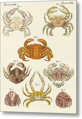 Different Kinds Of Crabs Metal Print