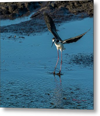 Dirty Feet Metal Print