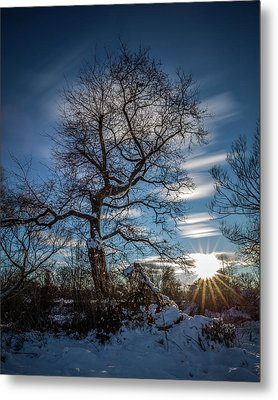 Metal Print featuring the photograph Do You Believe In Ents? by Davorin Mance