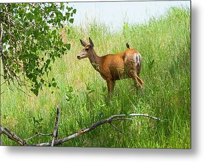 Doe Meets Bird 1 Metal Print