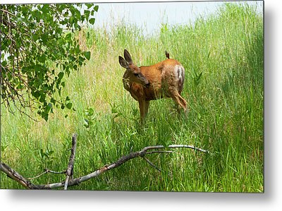 Doe Meets Bird 3 Metal Print