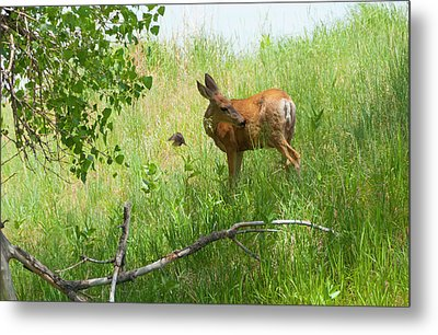 Doe Meets Bird 4 Metal Print