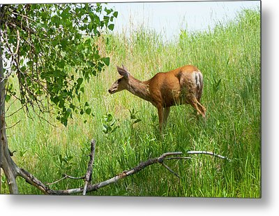 Doe Meets Bird 5 Metal Print