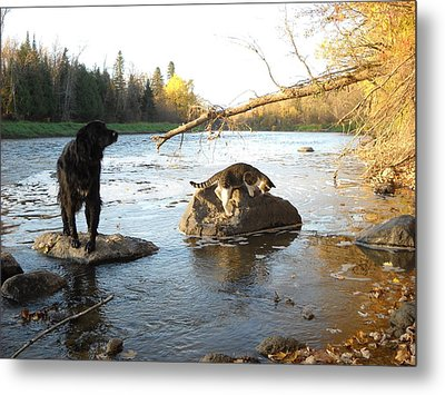 Dog And Cat Exploring Rocks Metal Print