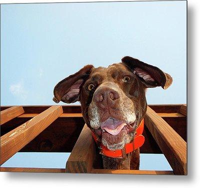 Dog Gone Crazy Metal Print