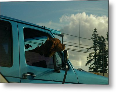 Dog Of A Day Metal Print by Robert Evans