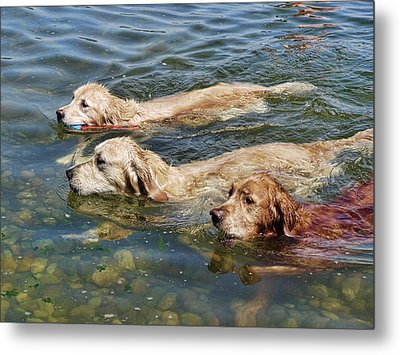 Dogs Are People Too Metal Print by Lawrence Christopher