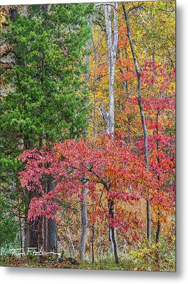 Dogwood And Cedar Metal Print