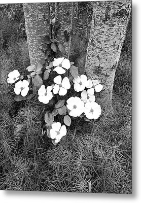 Dogwood And Tree Metal Print