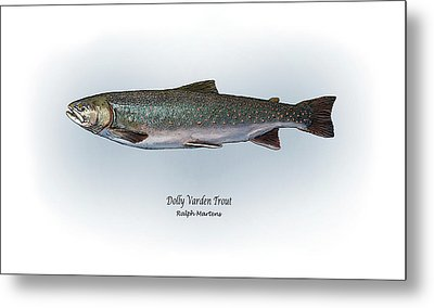 Dolly Varden Trout Metal Print by Ralph Martens