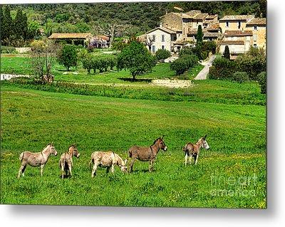 Donkeys In Provence Metal Print