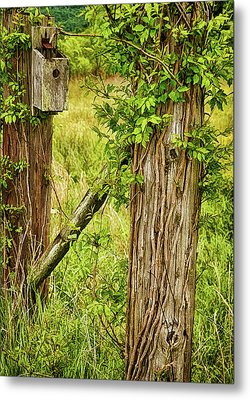 Don't Fence Me In Metal Print by Priscilla Burgers