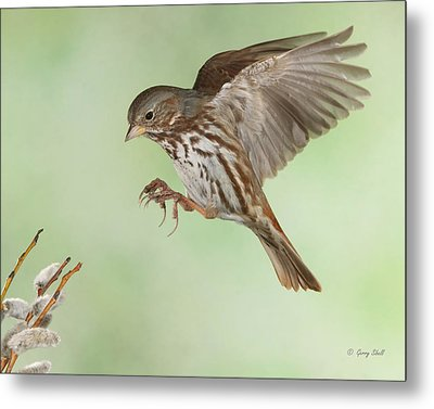 Metal Print featuring the photograph Don't Squeeze The Charmin by Gerry Sibell
