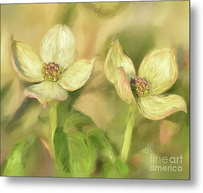 Double Dogwood Blossoms In Evening Light Metal Print by Lois Bryan