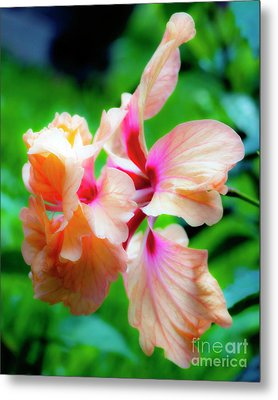 Double Peach Hibiscus Two Metal Print