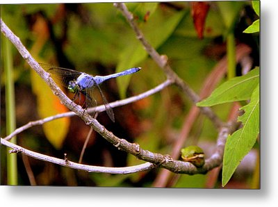 Dragonfly And Tree Frog Metal Print by Terri Mills