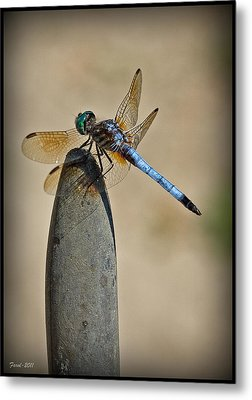 Dragonfly Metal Print by Farol Tomson