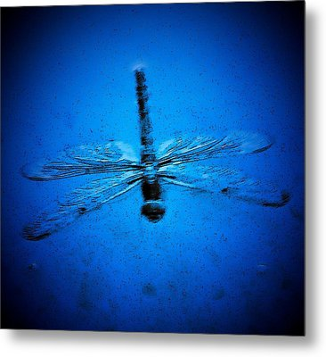 Dragonfly In Blue Metal Print