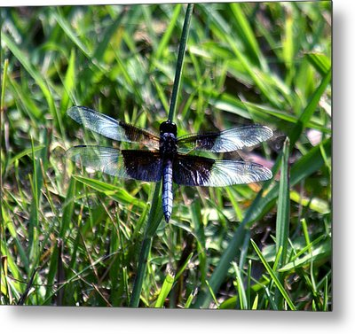 Dragonfly Resting Metal Print by D Winston