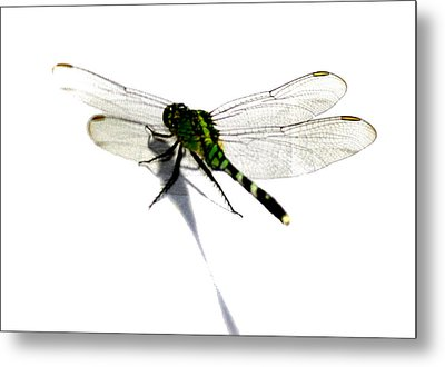 Metal Print featuring the painting Dragonfly by Tbone Oliver