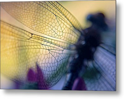 Dragonfly Wings Metal Print
