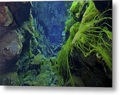 Dramatic Fluorescent Green Algae Metal Print by Mathieu Meur