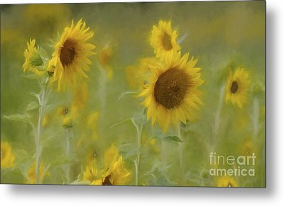 Metal Print featuring the photograph Dreaming Of Sunflowers by Benanne Stiens