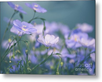 Dreamy Flax Flowers Metal Print