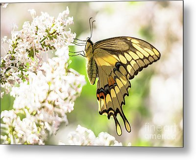 Dreamy Swallowtail Butterfly Metal Print