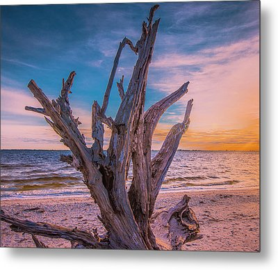 Metal Print featuring the photograph Driftwood Beach by Steven Ainsworth