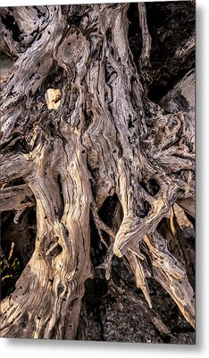 Metal Print featuring the photograph Driftwood Close-up by Steven Ainsworth