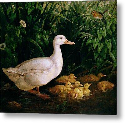 Duck And Ducklings Metal Print