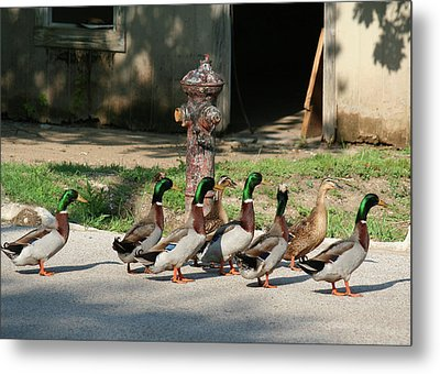 Duck And Hydrant Metal Print