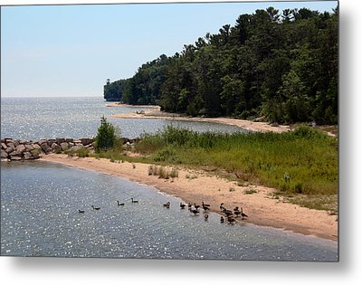 Metal Print featuring the photograph Ducks In A Row by Joanne Coyle